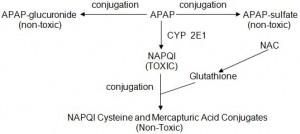 APAP Conjugation
